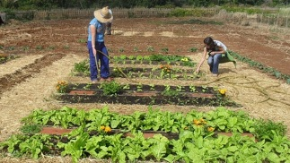 Futuro laboral tras estudiar Ingeniería Agrícola